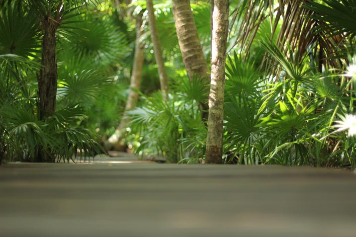 Riviera Maya Selva
